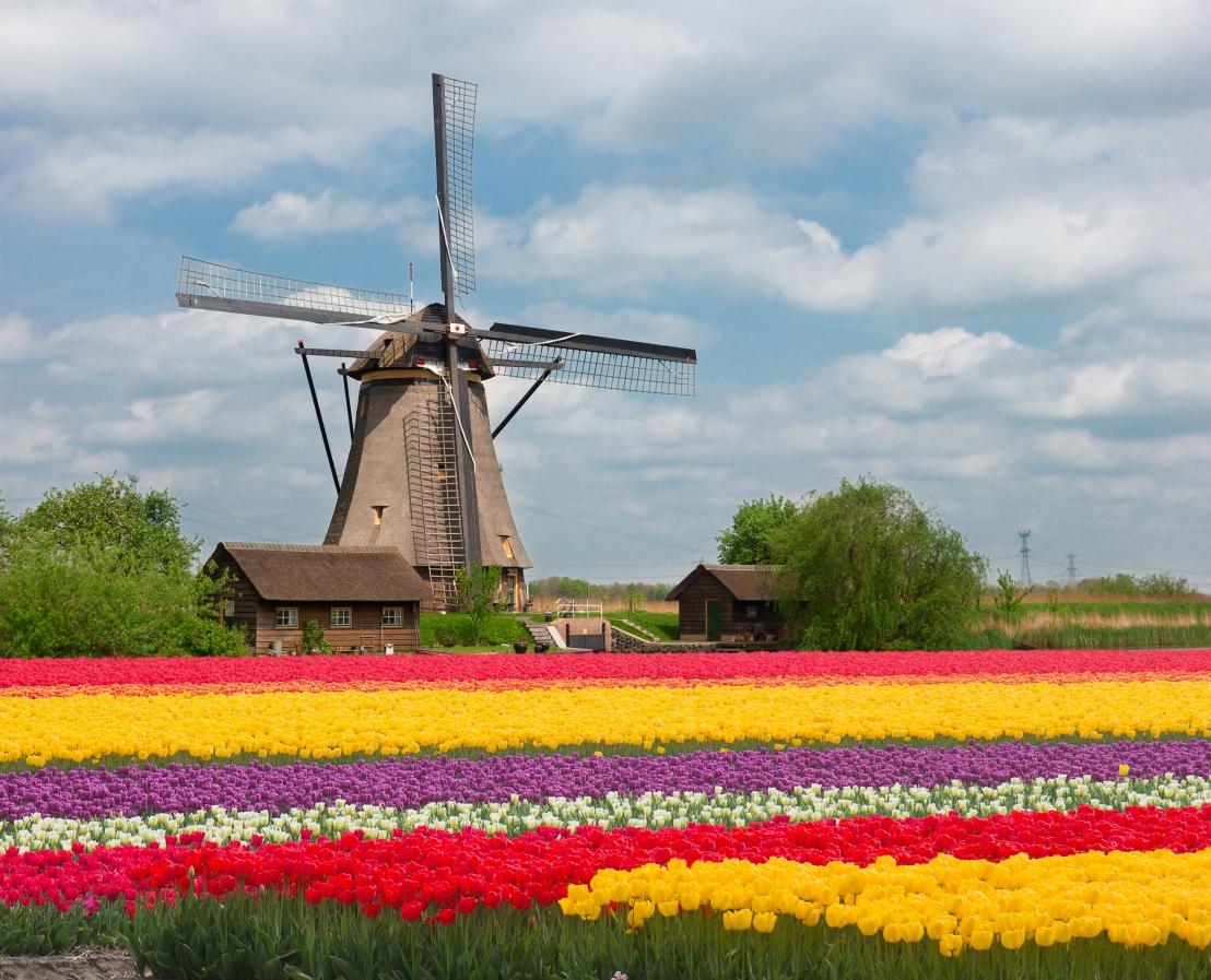 dutch_tulips
